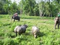Chitwan Wild Life Safari